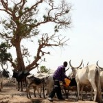 Nigeria's President Orders Crackdown On Fulani Cattle Raiders